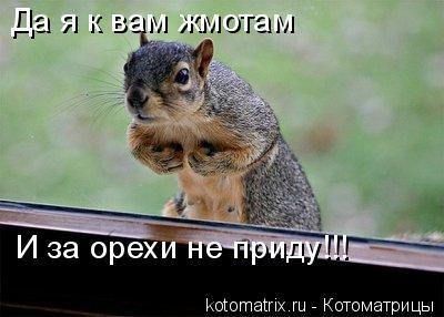Котоматрица: Да я к вам жмотам И за орехи не приду!!!