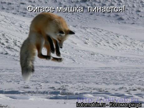 Котоматрица: Фигасе мышка  пинается!