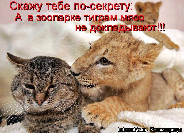 Котоматрица: Скажу тебе по-секрету: А  в зоопарке тиграм мясо  не докладывают!!!