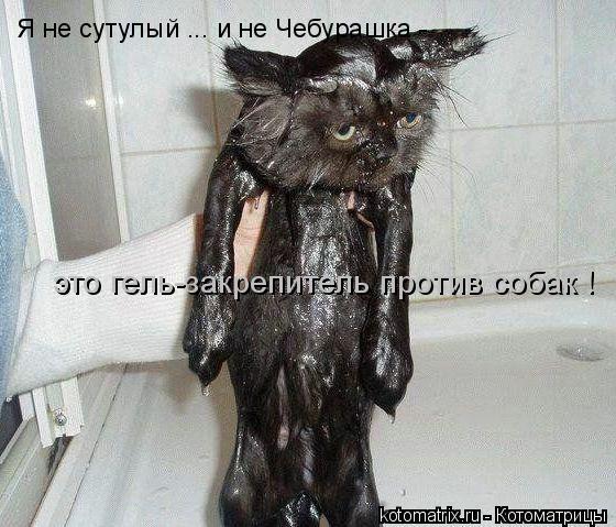 Котоматрица: Я не сутулый ... и не Чебурашка -  это гель-закрепитель против собак !