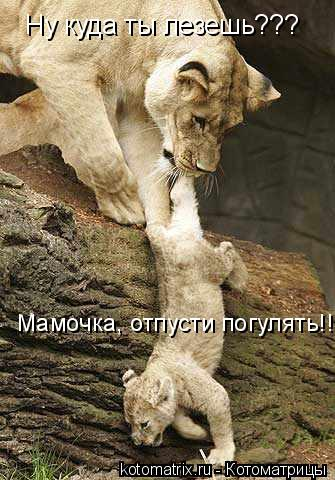 Котоматрица: Ну куда ты лезешь??? Мамочка, отпусти погулять!!