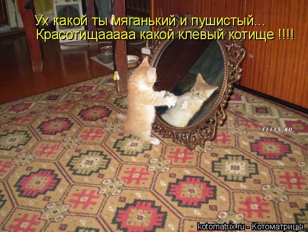 Котоматрица: Ух какой ты мяганький и пушистый... Красотищааааа какой клевый котище !!!!