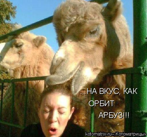 Котоматрица: ...НА ВКУС, КАК ОРБИТ АРБУЗ!!!