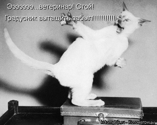 Котоматрица: Эээээээ...ветеринар! Стой! Градусник вытащить забыл!!!!!!!!!!!