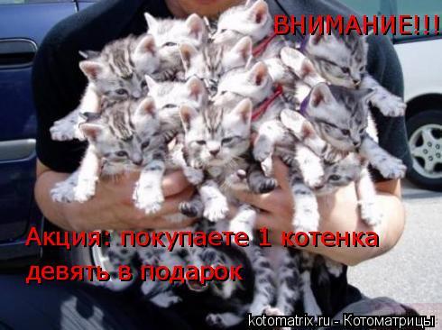 Котоматрица: Акция: покупаете 1 котенка девять в подарок  девять в подарок  ВНИМАНИЕ!!!