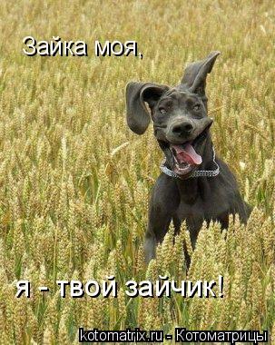 Котоматрица: Зайка моя, я - твой зайчик!