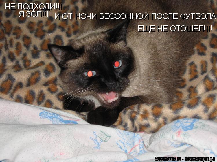 Котоматрица: НЕ ПОДХОДИ!!! Я ЗОЛ!!! ЕЩЕ НЕ ОТОШЕЛ!!!! И ОТ НОЧИ БЕССОННОЙ ПОСЛЕ ФУТБОЛА