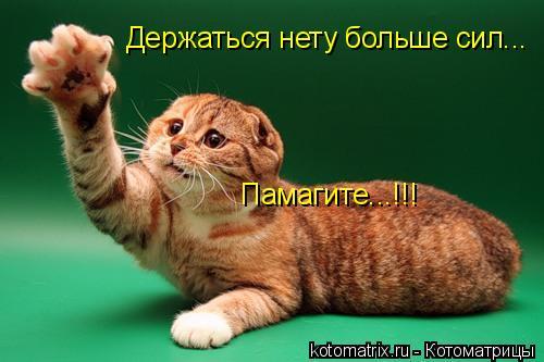 Котоматрица: Держаться нету больше сил... Памагите...!!!