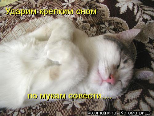 Котоматрица: Ударим крепким сном по мукам совести....