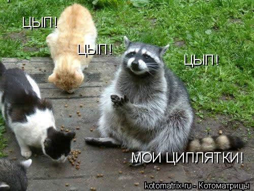 Котоматрица: ЦЫП! ЦЫП! ЦЫП! ЦЫП! МОИ ЦИПЛЯТКИ!