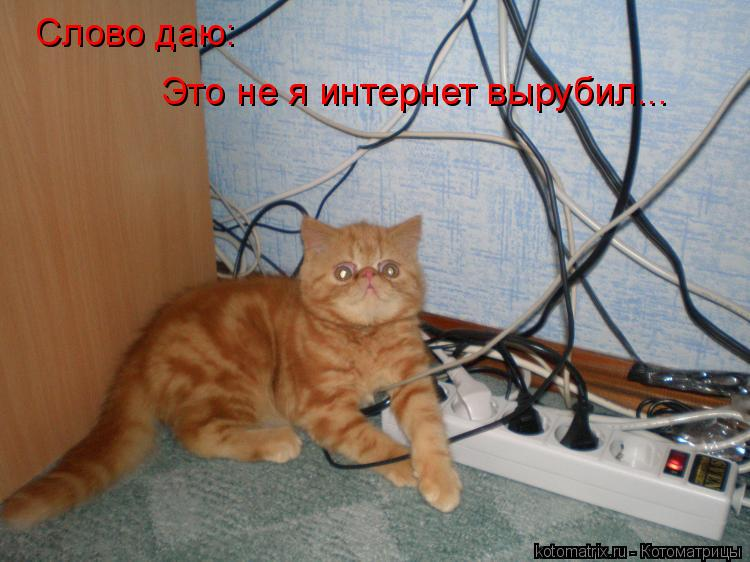 Котоматрица: Слово даю: Это не я интернет вырубил...