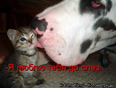 Котоматрица: Я люблю тебя до слез...