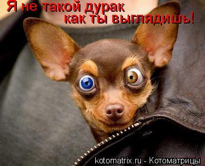 Котоматрица: Я не такой дурак как ты выглядишь!