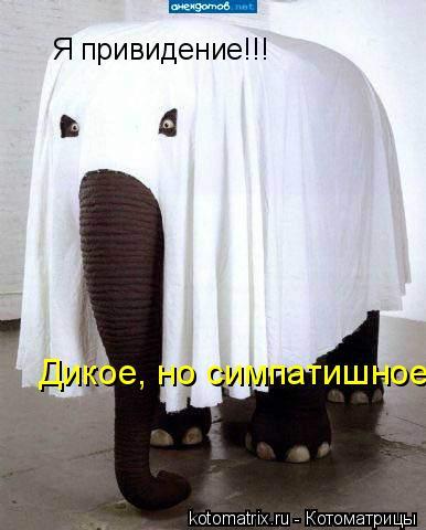 Котоматрица: Я привидение!!! Дикое, но симпатишное!