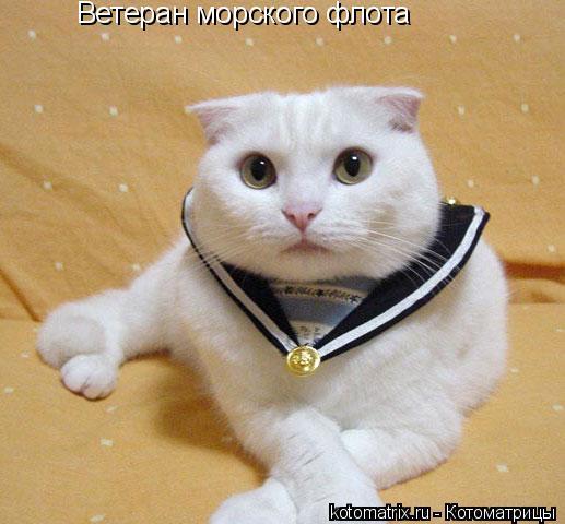 Котоматрица: Ветеран морского флота