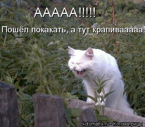 Котоматрица: ААААА!!!!! Пошёл покакать, а тут крапивааааа!!!