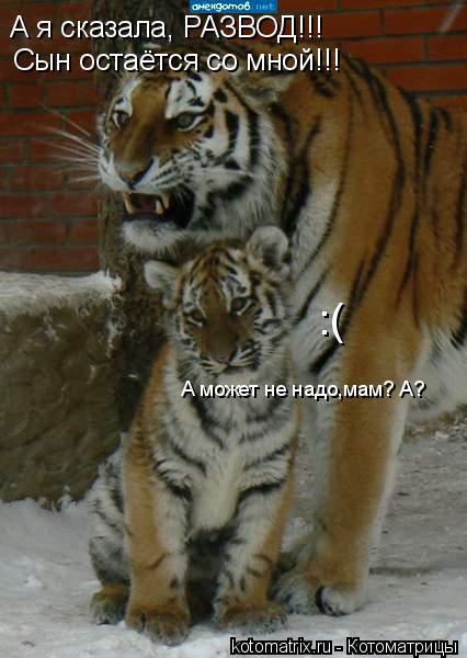 Котоматрица: А я сказала, РАЗВОД!!! Сын остаётся со мной!!! А может не надо,мам? А? :(