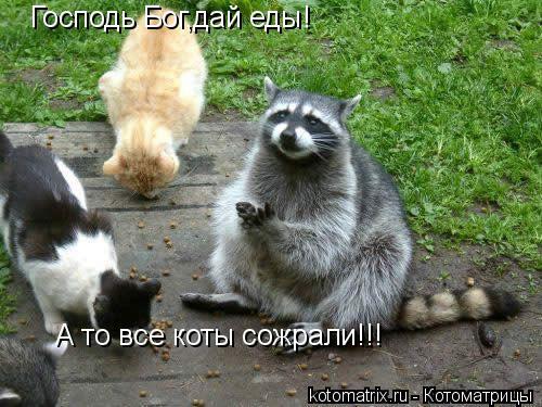 Котоматрица: Господь Бог,дай еды! А то все коты сожрали!!!