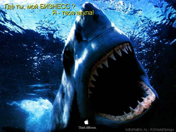 Котоматрица: Где ты, мой БИЗНЕСС ? Я - твоя акула!