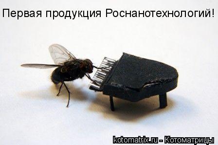 Котоматрица: Первая продукция Роснанотехнологий!