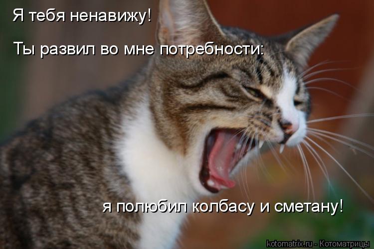 Котоматрица: Я тебя ненавижу!  Ты развил во мне потребности: я полюбил колбасу и сметану!