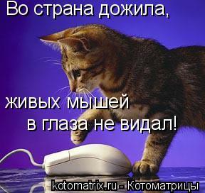 Котоматрица: Во страна дожила, живых мышей в глаза не видал!