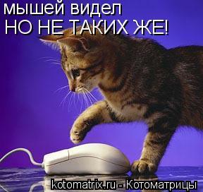 Котоматрица: мышей видел НО НЕ ТАКИХ ЖЕ!