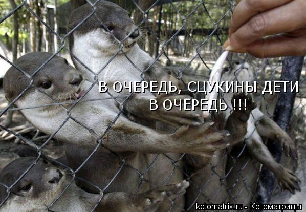 Котоматрица: _В ОЧЕРЕДЬ, СЦУКИНЫ ДЕТИ В ОЧЕРЕДЬ !!!