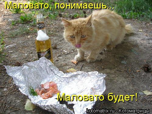 Котоматрица: Маловатo, понимаешь...  Маловатo будет!