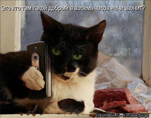 Котоматрица: Это кто там такой добрый в восемь часов ночи звонит?