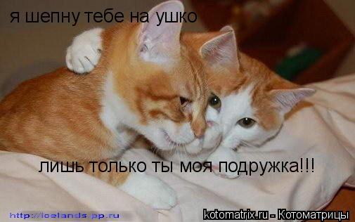 Котоматрица: я шепну тебе на ушко лишь только ты моя подружка!!!