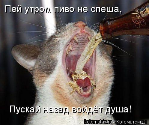 Котоматрица: Пей утром пиво не спеша, Пускай назад войдёт душа!