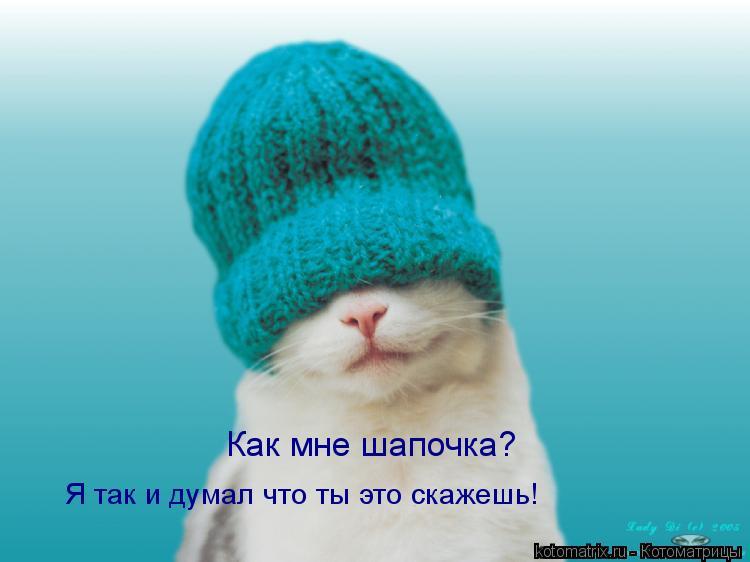 Котоматрица: Как мне шапочка? Я так и думал что ты это скажешь!