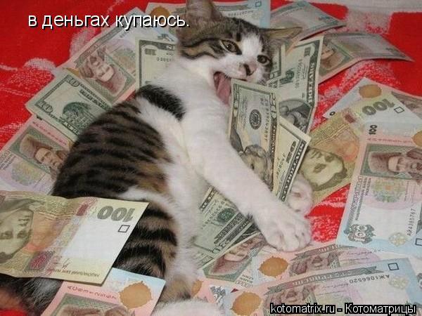 Котоматрица: в деньгах купаюсь.