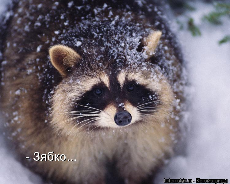 Котоматрица: - Зябко...