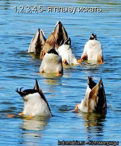 Котоматрица: 1,2,3,4,5- я плыву искать...