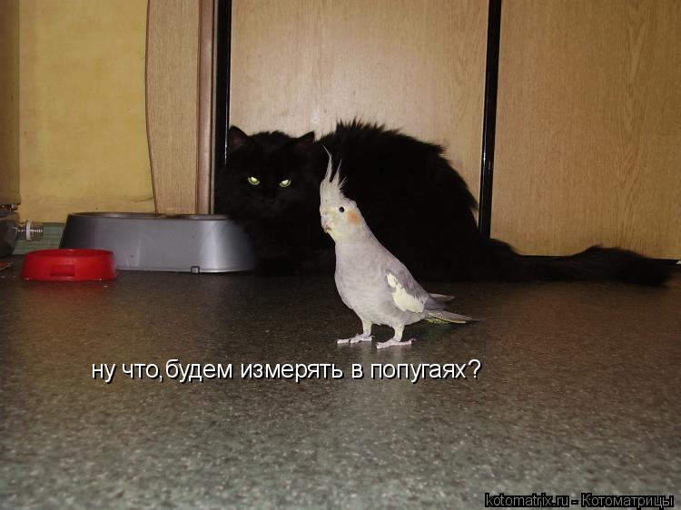 Котоматрица: ну что,будем измерять в попугаях?