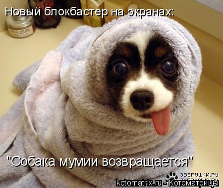 """Котоматрица: """"Собака мумии возвращается"""" Новый блокбастер на экранах:"""