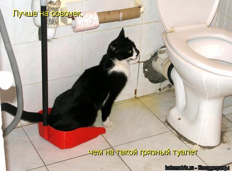 Котоматрица: Лучше на совочек, чем на такой грязный туалет