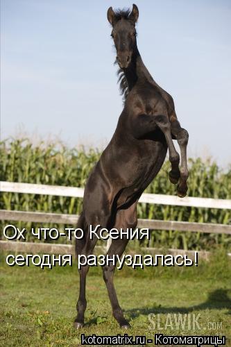 Котоматрица: Ох что-то Ксения сегодня разнуздалась!