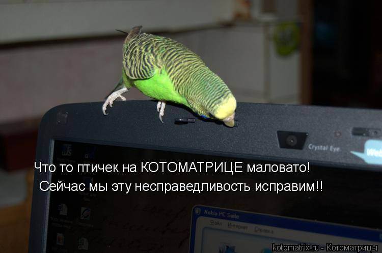 Котоматрица: Что то птичек на КОТОМАТРИЦЕ маловато! Сейчас мы эту несправедливость исправим!!