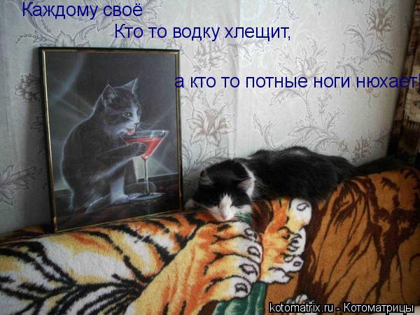 Котоматрица: Каждому своё Кто то водку хлещит, а кто то потные ноги нюхает!