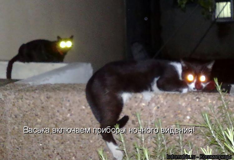 Котоматрица: Васька,включаем приборы ночного видения!