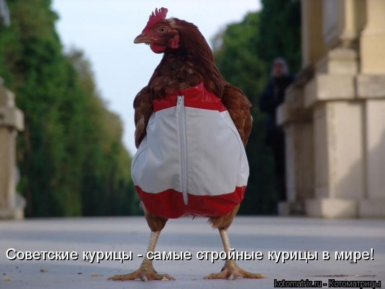 Котоматрица: Советские курицы - самые стройные курицы в мире!