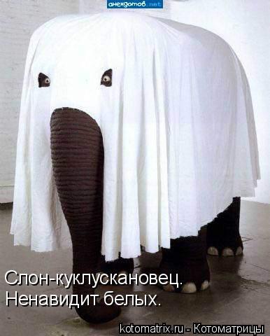 Котоматрица: Слон-куклускановец. Ненавидит белых.