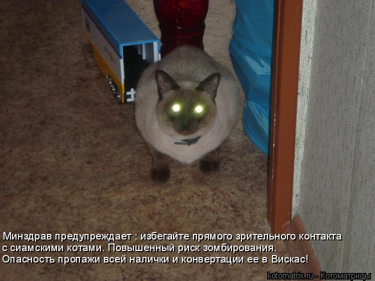 Котоматрица: Минздрав предупреждает : избегайте прямого зрительного контакта с сиамскими котами. Повышенный риск зомбирования. Опасность пропажи всей