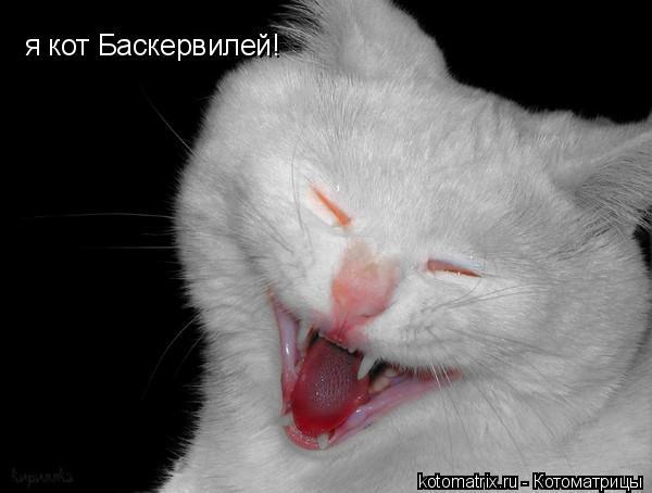 Котоматрица: я кот Баскервилей!