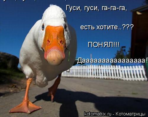 Котоматрица: Гуси, гуси, га-га-га, Гуси, гуси, га-га-га, ПОНЯЛ!!! есть хотите..??? Даааааааааааааааа!!!