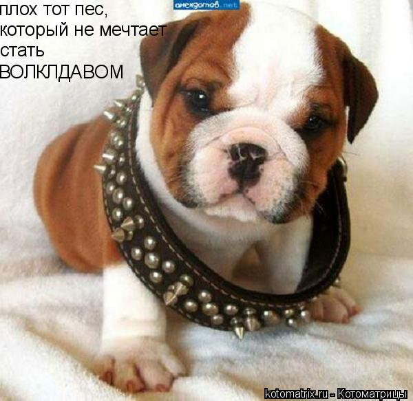 Котоматрица: стать ВОЛКЛДАВОМ который не мечтает  плох тот пес,