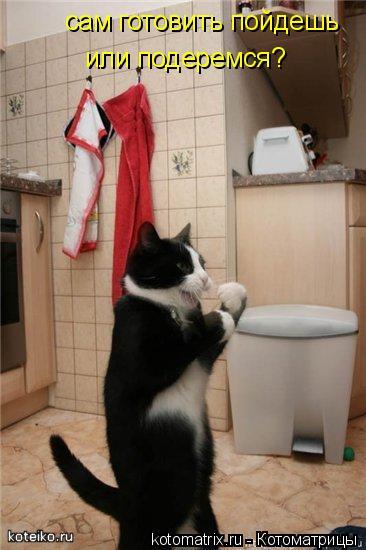 Котоматрица: сам готовить пойдешь  или подеремся?